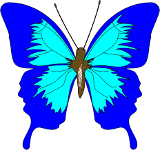 green butterfly cartoon images pictures becuo clip art library