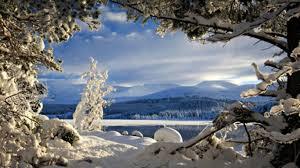 winter christmas tree weihnachten winter mas nature wallpaper