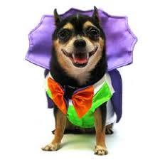 Female Dog Halloween Costumes 94 Dog Halloween Costumes Images Dog Halloween