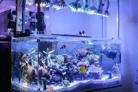 led reef aquarium lighting saltwater aquarium lighting schedule what are the biggest saltwater