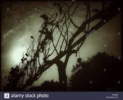 the sun breaks through the fog in the vineyard catalonia spain