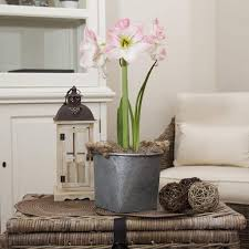 gift ideas for container gardening birds and blooms