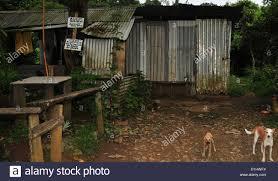 2 dogs standing brown soil front u0027tin shack u0027 farm house seven