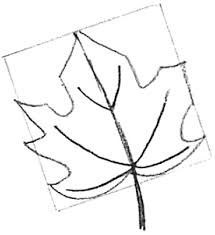 how to draw maple leaves easy leaf step by step drawing lesson
