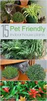 15 indoor plants that are safe for cats and dogs plants house