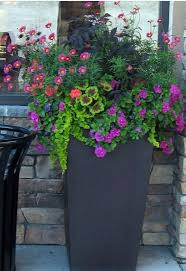 Container Gardening Flowers 30 Best Supertunia Recipes Images On Pinterest Flower Gardening