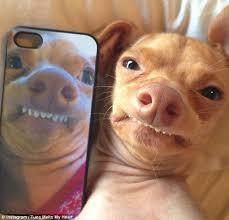 Dog Teeth Meme - funny looking dog meme 19 pics funny pics story