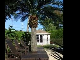 artificial palm tree in backyard