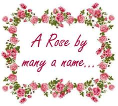 a by many a name tulipbyanyname