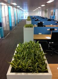 Office Plants by Built In Cabinet Trough Planters Bring Greenery Through The