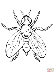 fly coloring page house fly coloring page free printable coloring