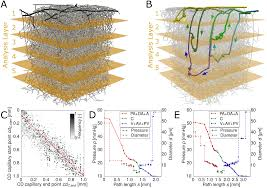 depth dependent flow and pressure characteristics in cortical