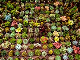 browse succulents by genus world of succulents