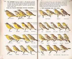 first edition peterson field guide to birds google search
