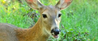 Pennsylvania wildlife images Pennsylvania chapter awards scholarships the wildlife society jpg