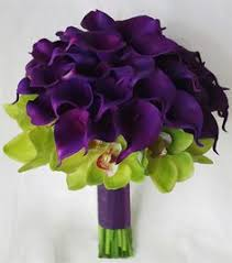 purple calla calla colors solidaria garden