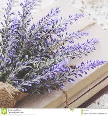 decoration with lavender bunch upon vintage books bundle stock image