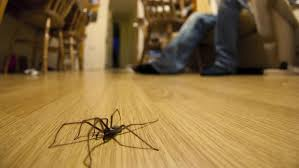 How To Keep Spiders Out Of Your Bed 10 Common Spiders You U0027re Likely To Find In A British Home Bt