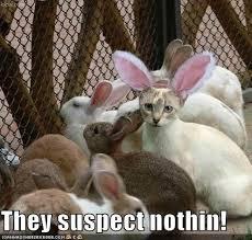 Cute Easter Meme - best 25 happy easter meme ideas on pinterest animal memes cute