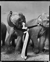 the very thorough analysis of dovima with elephants writing