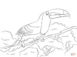perched keel billed toucan coloring page free printable coloring