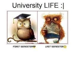 Uni Student Memes - funny memes about university students funny memes pinterest