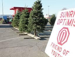 sedalia optimist club selling trees news