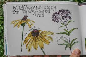 Minnesota travel journals images The north shore of lake superior wildflowers along the gitchi jpg
