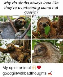 Make A Sloth Meme - why do sloths always look like they re overhearing some hot gossip