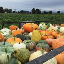 Best Pumpkin Patch Snohomish County by Bailey Farm Home Facebook
