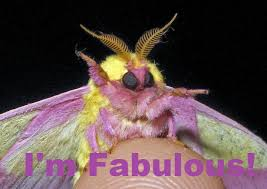 Moth Meme - image 261562 bitch i m flawless know your meme