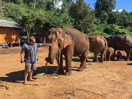 a visit to an elephant sanctuary in chiang mai