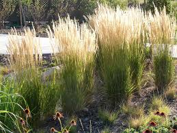 decor ornamental grasses with lowes ornamental grass also