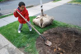 best time to plant trees when is the best time to plant a tree