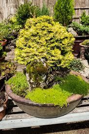 sizing up plants hgtv
