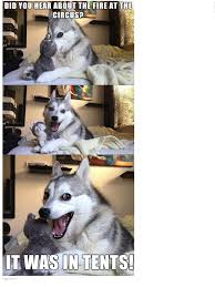 Pun Dog Meme - hahahaha horse board 2 pinterest pun husky memes and husky