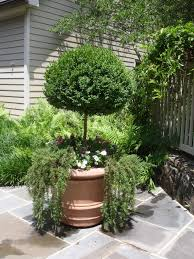 Rosemary Topiary Container Gardening Spring Has Sprung
