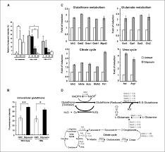 chemopreventive effect of silymarin on liver pathology in hbv x