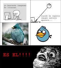 Angry Bird Meme - nuevo angry bird real memes pinterest angry birds memes