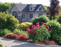 139 best peonies in garden images on pinterest flower gardening