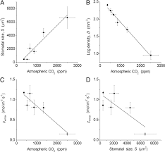maximum leaf conductance driven by co2 effects on stomatal size