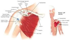 Pain In Shoulder When Bench Pressing Shoulder Injury Treatment