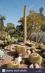 Huntington Botanical Gardens Pasadena by The Huntington Library Art Collections Botanical Gardens Cactus
