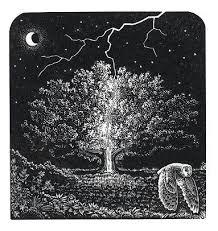 andy the lightning tree birds