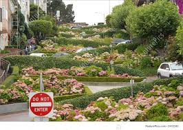 San Francisco Flower Garden by Lombard Street Stock Picture I1412343 At Featurepics