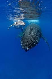 314 best whale spirit power animals images on pinterest ocean