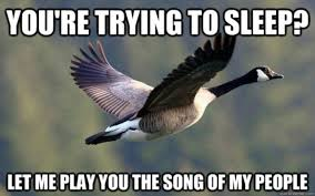Crazy Bird Meme - the 20 funniest animal memes