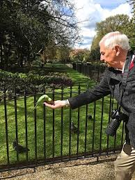 me feeding the parrots in hyde park picture of on