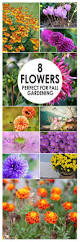 best 25 fall flower gardens ideas on pinterest bulb flowers