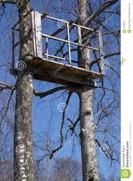 tree stand in birch trees royalty free stock images image 4948579
